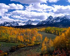 The San Juan Mountain Range with fall Aspens near Ridgway Colorado
