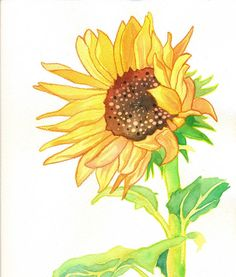 Flower Power Series Sunflower Print (Watercolor Yellow, Gold, Green and Brown Flower) Watercolor Flowers, Watercolor Paintings, Ink Paintings, Watercolour, Power Series, Psychedelic Colors, Plant Drawing, Green And Brown, Olive Green