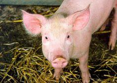 "CRAZY Terrorist WACKOS! Animal Rights Activists to Protest Matadero Cabrera Farm: ""We Could Hear the Pigs Screaming"""