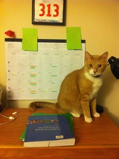 Studious Cat