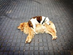 """""""Okay, you might be my best buddy best you're an even BETTER pillow."""" 