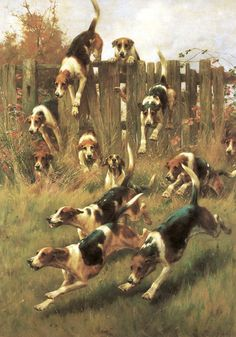 Seeking superior fine art prints of Hounds at Full Cry by Thomas Blinks? Customize the size, media & framing for your style. English Foxhound, Hunting Art, Fox Hunting, Women Hunting, Hunting Humor, Hunting Quotes, Hunting Cabin, Hunting Gifts, Turkey Hunting