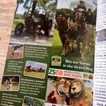 Weeting Steam Engine Rally & Country Show - see the heavy horses from Banham Zoo at this years Rally, along with their mascots! via ktdesign (ktdesignweb) on Twitter