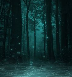 Fae Lights in Enchanted Forest