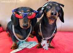 Dachshund Bruthas from Different Muthas – Wiener Dog Brothers