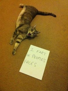 Stay away from this cat...