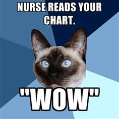 Chronic Illness Cat // And asks to spell your condition! #wow / *Have article idea on this one