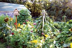 You can create a strong climbing tipi for your vining vegetables with downed tree limbs and branches.