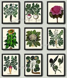 BOTANICAL Print SET of 9 Art Print 8X10 Aldrovandi by LoveThePrint