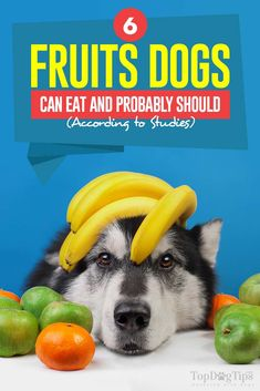 6 Fruits Dogs Can Eat According To Science Dog Health Diet Fruit Dogs Can Eat, Fruits For Dogs, Can Dogs Eat, Dog Nutrition, Animal Nutrition, Nutrition Education, Homemade Dog Treats, Healthy Dog Treats, Dog Weight