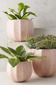 Such gorgeous soft colours! Anthropologie Ridged Terracotta Pot ad