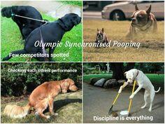 Jan 2018, Olympics, Dogs, Animals, Animales, Animaux, Pet Dogs, Doggies, Animal