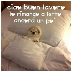 Hello, I'm still sleepy. staying in bed a little longer 😉 Italian Humor, Italian Quotes, Good Morning Coffee, Stay In Bed, Good Night, Chihuahua, Funny, Phrases In Italian, Sink Tops