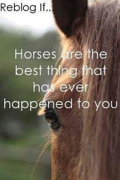 Yes!!!!!!!!!!!!!!!!! Comment below if you love horses!!!!!!!!!!!!!