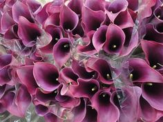 Hilverda De Boer Dutch Callas, available at #WinstonFlowers