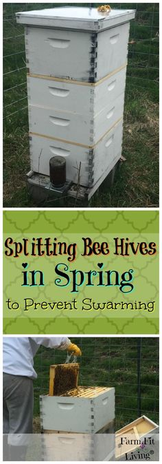 Looking For Options For Splitting Bee Hives In Spring? Hereu0027s A Fool Proof  And Proven