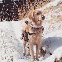 We are born to wander 🐾  #hikewithyourhuman #hiking #mountain #adventure #snow #white #fun #weekend #baqueira #explore #atlasfrostyfirst