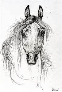 Arabian Horse Drawing 55  Fine Art