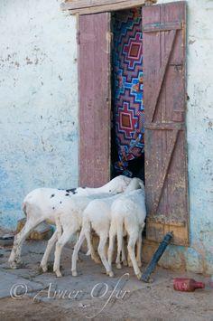 West Africa | AvnerOfer