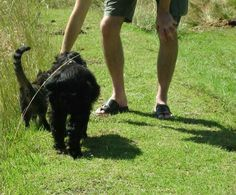 """They actively enjoyed the walk with us. They walked back with us, branched off at their home with an air of """" goodbye and thanks for the walk""""."""