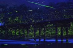 Bridge Over the Shimanto River, Japan, 2013 by Takehito Miyatake. In the early summer twilight, genji botaru fireflies fly exuberantly over the river surface. With paddy fields along the river, the sight represents an image of a countryside where people and nature coexist.