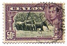 King George VI and Views- Wild elephants