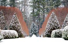 Garden in Winter - David Fuller