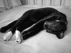 Donut Cat Sleeping, Have A Laugh, Panther, Cats, Funny, Animals, Gatos, Animales, Animaux