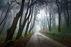 Into the Mystic, Sintra, Portugal photo via ninbra