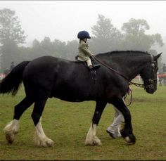 Picture this horse plowing a field with a little girl hanging on bareback......ME!  I didn't wear a helmet either.