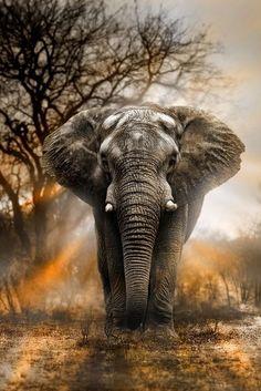 Diamantmalerei - Wilder Elefant Diamond Painting Type: Full Diamond Painting with Full Drill Diamond Photo Elephant, Bull Elephant, Elephant Love, Elephant Quotes, Elephant Pictures, Photos Of Elephants, Elephant Spirit Animal, Elephant Family, Baby Elephants
