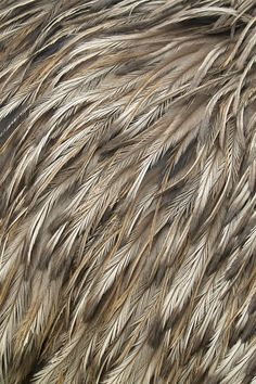 These feathers would have a soft, fuzzy texture to the touch. They look sleek…