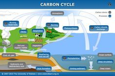 INFO SHEET - Carbon cycle - As a component of various compounds, carbon cycles between the atmosphere, oceans and living organisms, through the combined processes of photosynthesis, decomposition and respiration. Biology Lessons, Teaching Biology, Science Lessons, Life Science, Ap Biology, Science Experiments, High School Biology, Middle School Science, Science Classroom