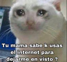 𝒅𝒆𝒎𝒂𝒔𝒊𝒂𝒅𝒂𝒔 𝒇𝒐𝒕𝒐𝒔 𝒅𝒆 𝒈𝒂𝒕𝒐𝒔 𝒍𝒍𝒐𝒓𝒂𝒏𝒅𝒐 𝒐 ?… #detodo # De Todo # amreading # books # wattpad Funny Spanish Memes, Spanish Humor, Cute Memes, Funny Memes, Reaction Pictures, Funny Pictures, Meme Stickers, Doja Cat, Wholesome Memes