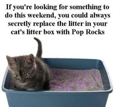 Pop Rocks Prank For Cat