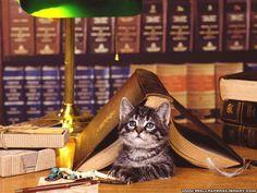 cat and book wallpaper
