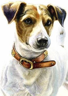 Realistic Portrait Drawing photo realistic portrait of a parson jack russell terrier Chien Jack Russel, Parson Jack Russell, Jack Russell Terrier, Mini Jack Russell, Animal Paintings, Animal Drawings, Dog Drawings, Smooth Fox Terriers, Watercolor Animals