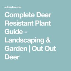 Complete Deer Resistant Plant Guide - Landscaping & Garden | Out Out Deer