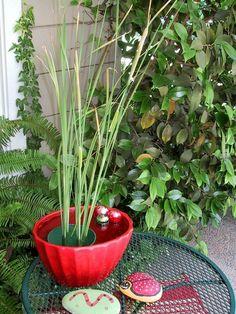 mini-garden-water-basin water-red exterior
