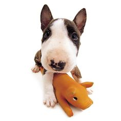Artlist Collection THE DOG (Bull Terrier) — Lots of love to you!