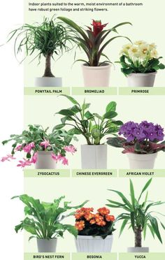 Bathroom plants Reader s Digest Australia Inside Plants, Cool Plants, Small Plants, Perfect Plants, Fake Plants, Cactus Plants, Container Gardening, Gardening Tips, Gardening Gloves