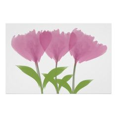Abstract Minimalistic Watercolor Peony Bouquet Poster