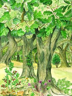 Illustrazioni naturalistiche eseguite con il metodo scientifico del disegno dal vero.  Ambientazioni e paesaggi di soggetti botanici o zoologici, eseguiti con rigore nella ricerca dei particolari che definiscono il tema designato  Serie disponibili:        -Varietà olivi abruzzesi      - Rose spontanee      - Gufo comune      - Rosa canina      - Rovo      - Tussilagine      - Ortica      - Borragine      - Tarassaco      - Farfalle      - Barbagianni
