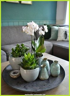 Table decoration green & wonderfully fresh # orchid care Very easily a green wound . - Table decoration green & wonderfully fresh Simply conjure up a green wonderland on - Decoration Bedroom, Decoration Table, Room Decor, Decoration Restaurant, Orchid Plants, Orchids, Green Orchid, Table Decor Living Room, Blogger Home