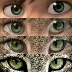 Hiccup/bobcat eyes