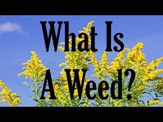 Did you know that you can pick wild greens, also known as edible weeds, from your garden and eat them? Identifying edible weeds can be a fun way to help encourage you to weed your garden more often. Learn more here. What Are Weeds, Weed Control, Episode 5, Did You Know, Knowing You, Encouragement, The Creator, Gardening, Youtube