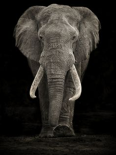 I just read on Elephant Advocacy fb page about a woman asking what to do with a Fine Antique Ivory Sculpture she inherited - She thought to sell it & give proceeds to Elephant causes. They say the right thing to do is burn it to get it out of the market to prevent the encouragement of further slaughter of Elephants for tusks. I don't even want faux Ivory in our house...