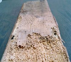 Wood worm in pine floor board Pine Floors, Mother Nature, Homes, Shape, Flooring, Wood, Houses, Woodwind Instrument, Timber Wood