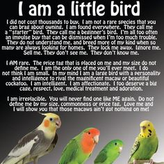 "image via Texts from Parrots Budgies, lovies, tiny birds are not throw-away, ""Oh I forgot to feed it."" birds! They are intelligent and capable of love just like the bigger birds. Spread Small-Birds-Are-Just-As-Amazing-As-Big-Birds Awareness!"