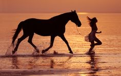 horse all-creatures-great-small